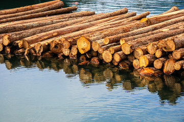 timber on the river