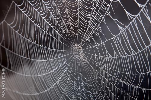 Das Netz einer Spinne - 81218449