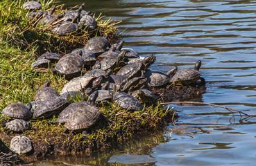 Cerca immagini animali acquatici for Stagno artificiale per tartarughe