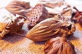 Closeup seedpod of the Lotus poster