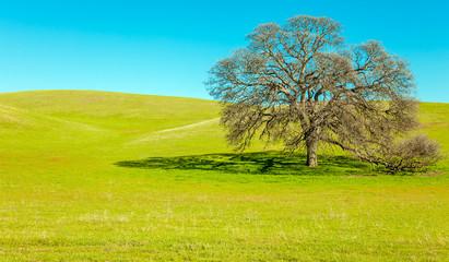 Landschaft in Kalifornien