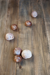 Shells of snails on the wooden background