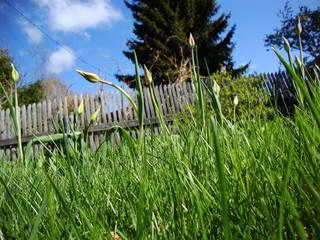 зеленая трава на  фоне старого забора и синего неба