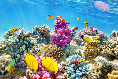 canvas print picture Underwater world with corals and tropical fish.