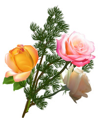green plant and three color roses on white