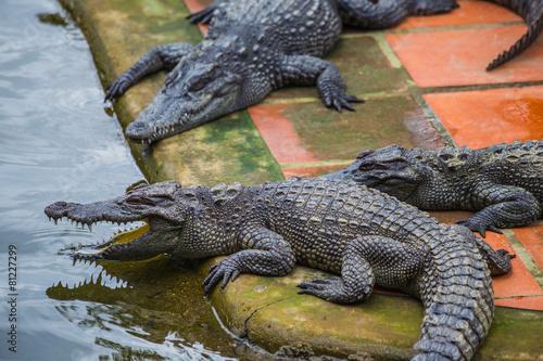 Foto op Plexiglas Krokodil water bodies on the Crocodile Farm in Dalat.