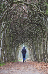 Man walking in a tunnel of trees on a foggy morning.
