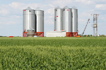 Silver silos in wheat field