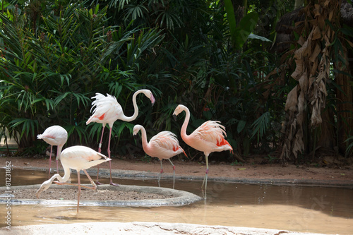 Tuinposter Flamingo The Andean flamingos
