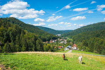 Landschaftspanorama, Bad Herrenalb