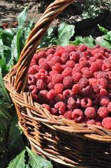 red ripe raspberry