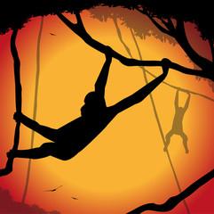 silhouette di scimmie appese agli alberi
