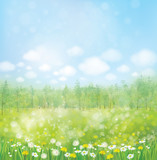 Fototapety Vector spring blossoming meadow with forest background.