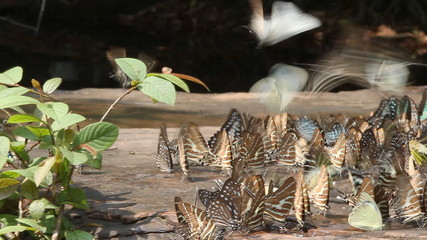 Group of butterflies in nature, slider shot