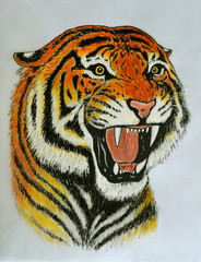 tiger roar drawing