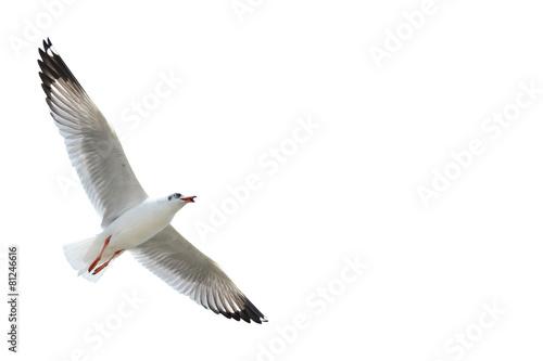 Aluminium Vogel Seagull isolated on white