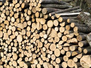 Frisch gesägtes Brennholz