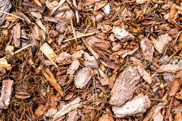 Shredded bark texture
