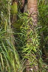 Nikau palm tree trunks covered by vegetation