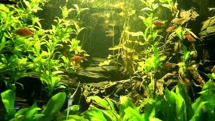 Beautiful fishes swimming in an aquarium.