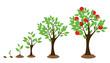 Tree Growth - 81264048