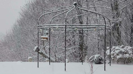 Heavy snowfall in garden surrounded by woods