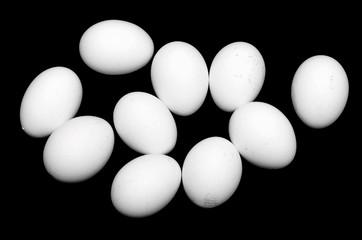 white chicken egg