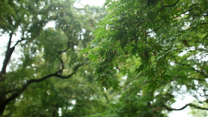 Beautiful fresh green leaves in forest