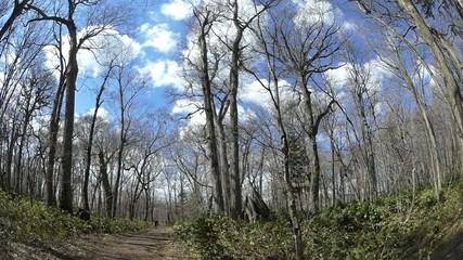 森の中の青空と雲・超広角レンズとジブアームを使用した動画_2