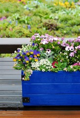Flowers put on a blue container in the rain.