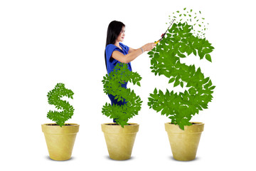 Woman maintain the money tree