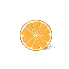 orange half cut circle citrus fruit color sketch draw isolated