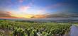 Leinwanddruck Bild - Panorama of vineyards at sunrise time, Beaujolais, Rhone, France