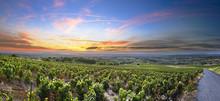 "Постер, картина, фотообои ""Panorama of vineyards at sunrise time, Beaujolais, Rhone, France"""