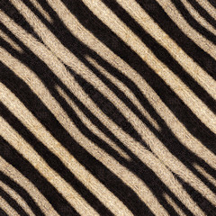 Abstract seamless background or texture of zebra stripes.
