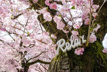 Auszeit: relaxen, entspannen unter Japanischer Kirschblüte :)