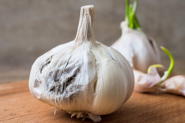 Rotting garlic