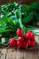 Fresh radishes, fresh green onion and different fresh herbs on