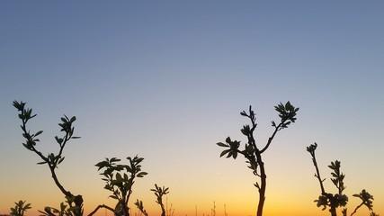 Primavera al tramonto