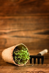 Peat pots and garden tools on wood background