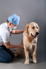 student spends auscultation dog