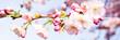 Leinwanddruck Bild - kirschblütenzweige