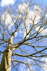 naked branches of a tree against blue sky with cloud close up
