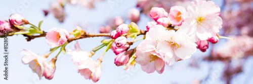 Leinwanddruck Bild kirschblütenzweige