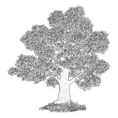 Oak tree and grass black contours
