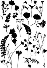 twenty two black isolated silhouettes of wild flowers