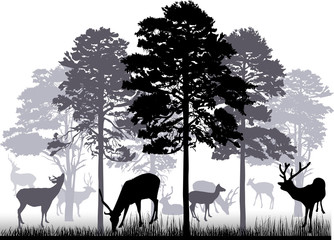 lot of deers in gray forest