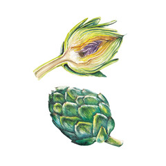 Watercolor artichoke set