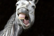 Laughing Horse Funny Happy White Smiling Teeth