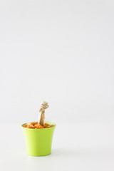 Isolated Green Potted Cactus Flower
